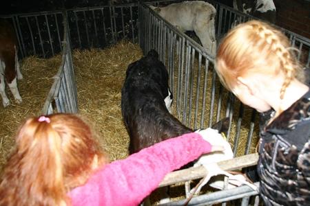 Goirlenet_Winter_Farm_Fair_18_3